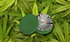 cannabissnus-2019-l
